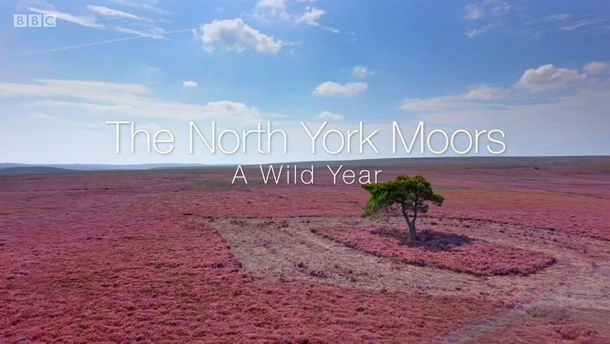 The North York Moors: A Wild Year