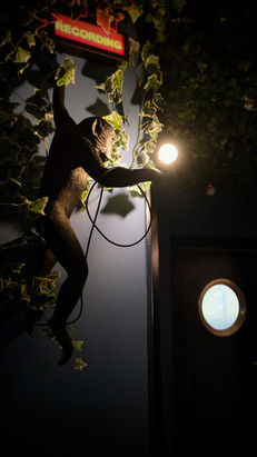 Monkey Hanging From The Recording Sign
