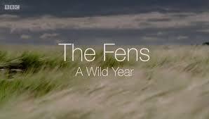 The Fens: A Wild Year