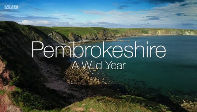 The Pembrokeshire Coast: A Wild Year