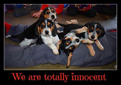 totallyinnocent.jpg