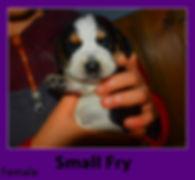 smallfry.jpg