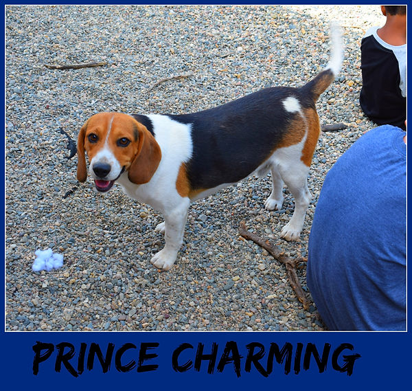 princecharming.jpg