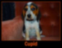 cupid1 - Copy.jpg