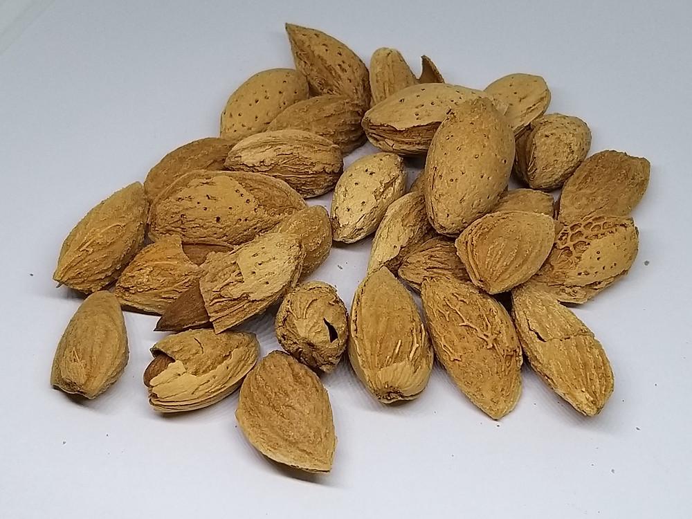 Kashmiri butterpaper almond shell