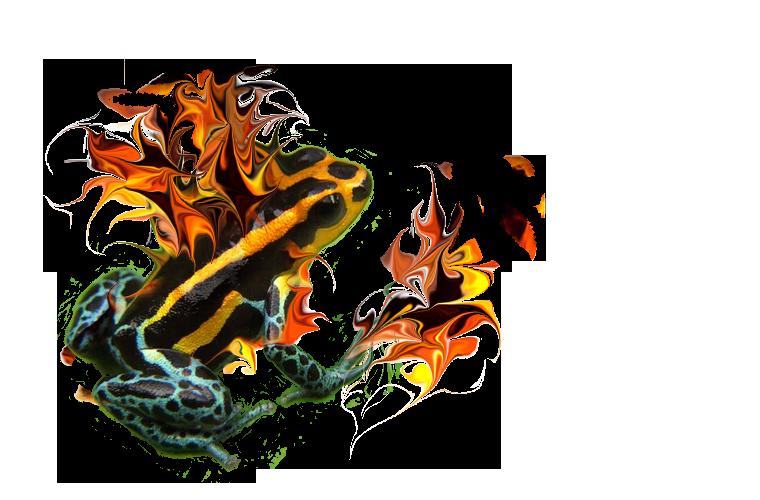Fiery Frog Creations