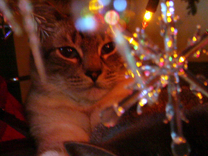 Frank in the Christmas tree_edited