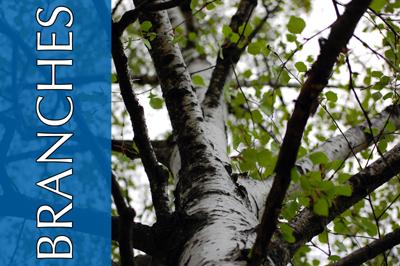 branches copy.jpg