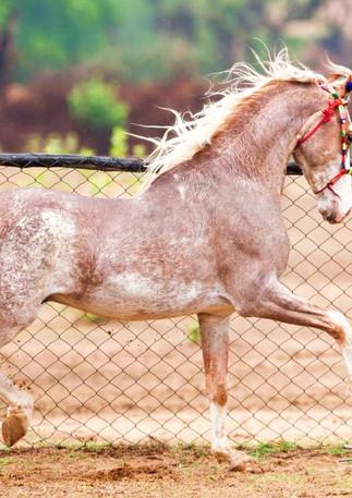 horse running .jpg