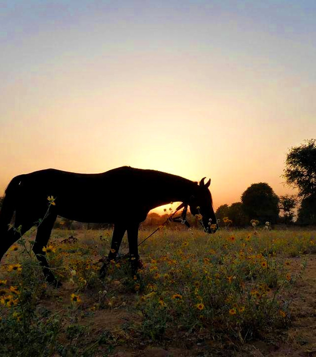 Horse  (1).jpg