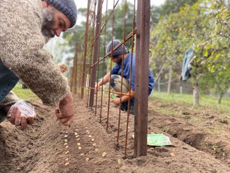 Hope Seed - Voices of Regen #4: Jarrod Ruch