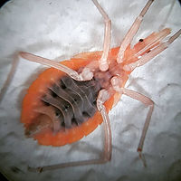 Mosquito arboviral surveillance Ho Chi M