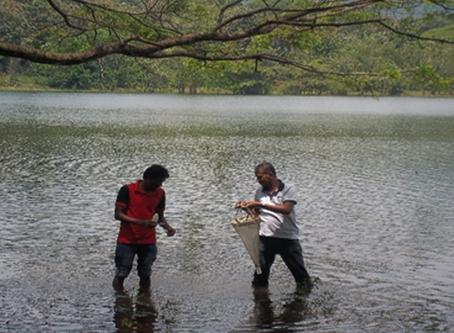 Towards the biocontrol of dengue: copepods as predators of Aedes larvae in Sri Lanka