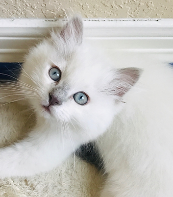 KittensC.png