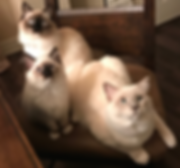 Cats - all 3 .png