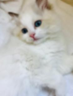 KittensB.png