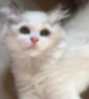 kittensE.png