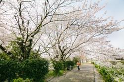 出張写真撮影 入園 入学 大阪 京都 兵庫 奈良
