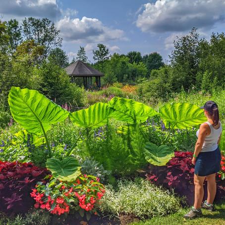 Parc Marie-Victorin, Le jardin du paradis à Kingsey Falls