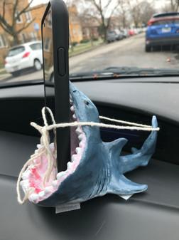 sharkside.JPEG