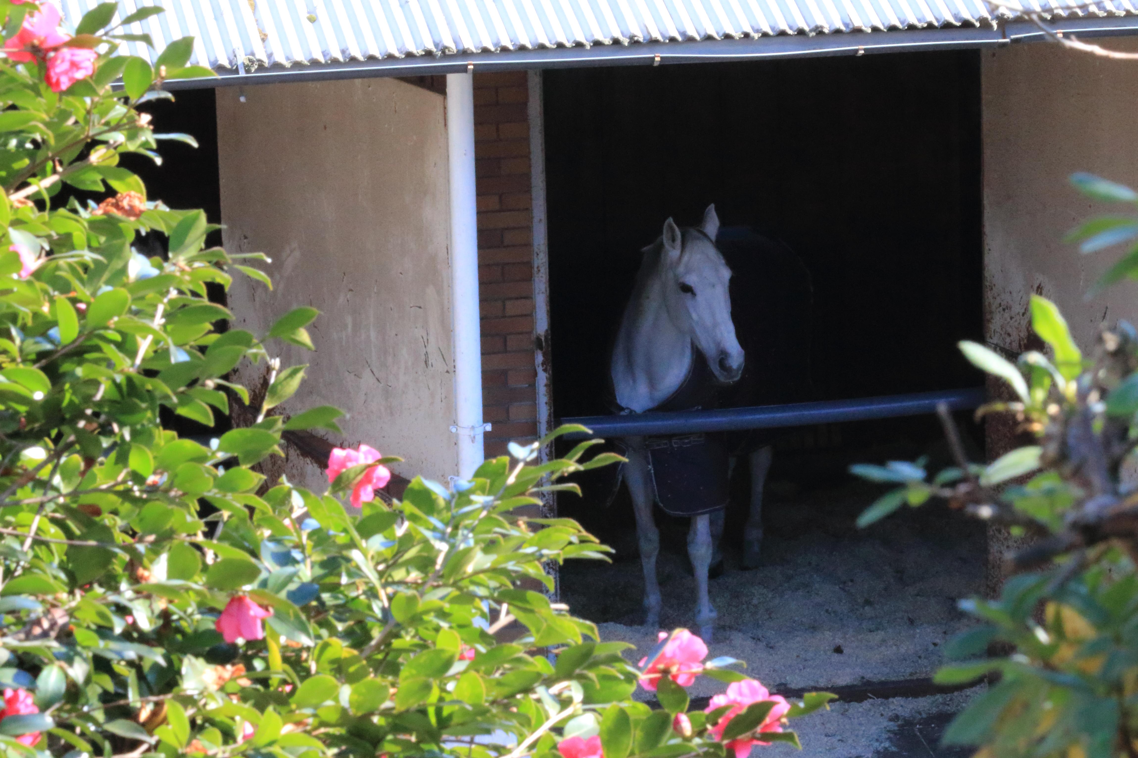 厩舎キリコ パンフ