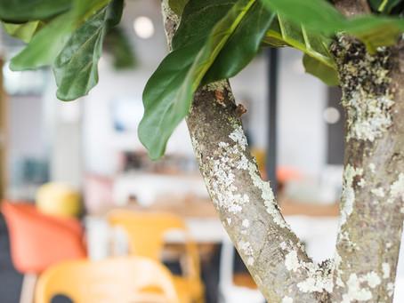 Vos bureaux provisoires dans la salle de réunion Rokoriko Jungle 🌴