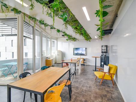 UNE AMBIANCE VERDOYANTE : les plantes de votre salle de réunion Rokoriko Jungle !