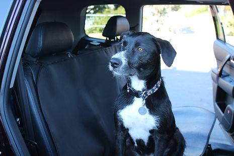 Lila on back seat.jpg