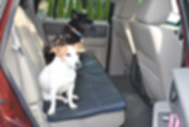Dogs sitting on a mat in the backseat of a car