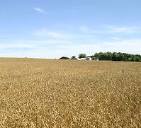 DUSSEL FARM