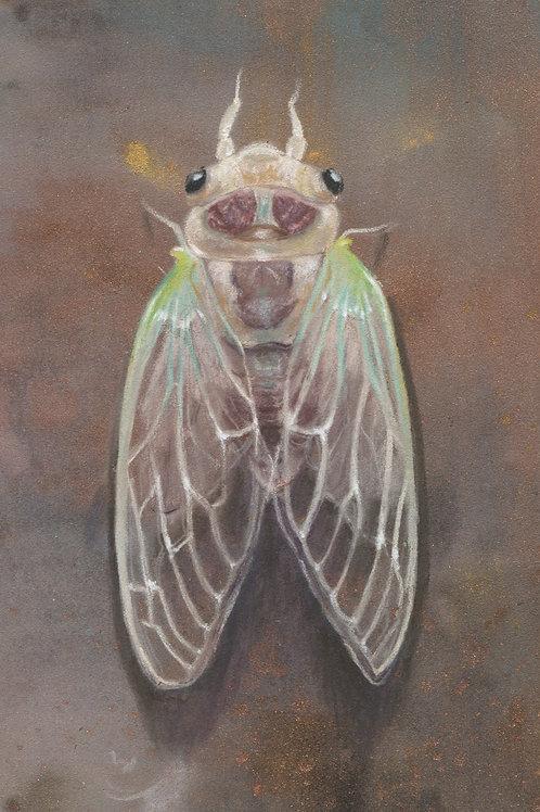 """Baby Cicada"" Open edition print"