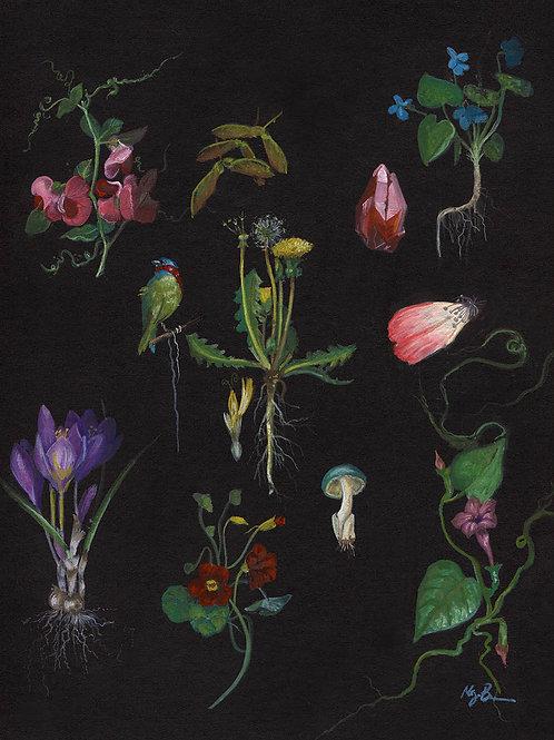"""Botanicals no.1"" Open Edition Print"