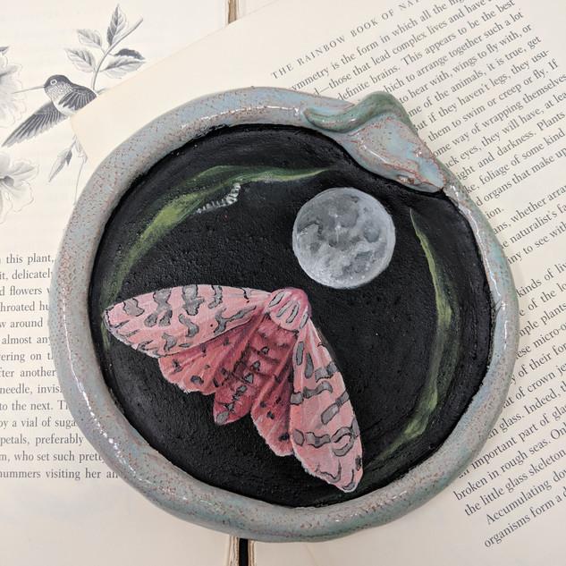 pink tiger moth 2.jpg