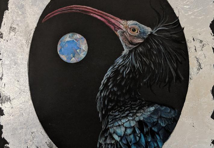 ibis and opal.jpg