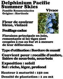 delphinium pacific blue.jpg