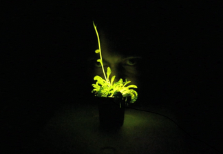 FROM GLOWING PLANT TO TAXA BIOTECHNOLOGIES: A NEW BUSINESS MODEL FOR SYNTHETIC BIOLOGY?