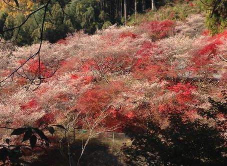桜のおすすめスポット