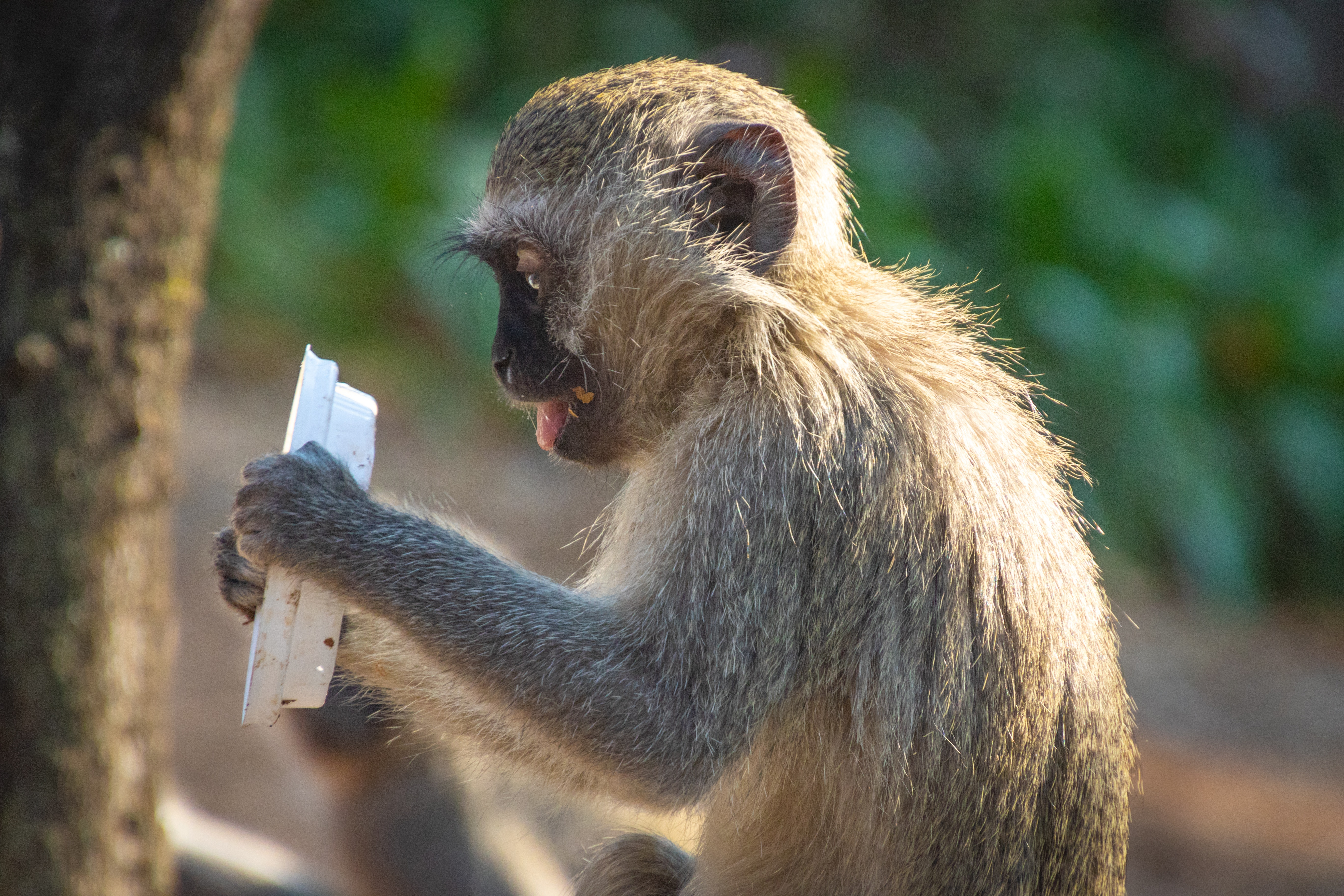 shallow-focus-photography-of-monkey-hold