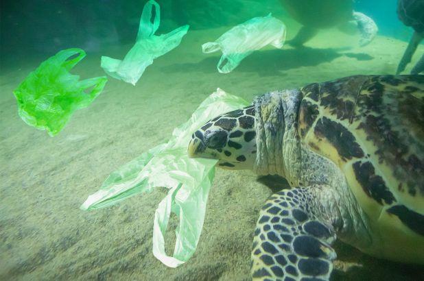 181130-eliminating-plastic-environment-f