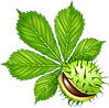 chestunt-clipart-chestnut-tree-14.png