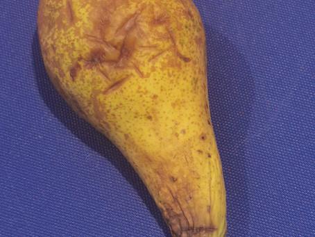 Har du frukt som er blitt overmoden?