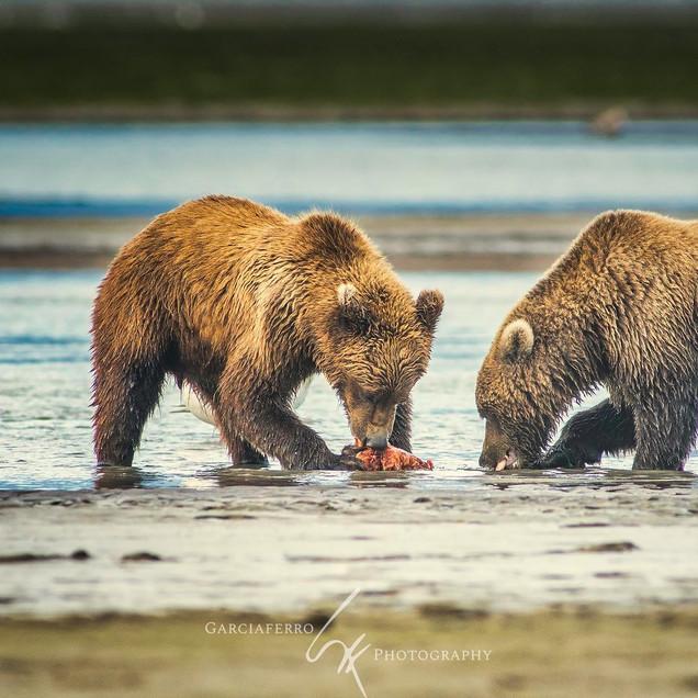 ALASKA OSOS