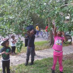 Winter Break Camp Mulberry picking 2016