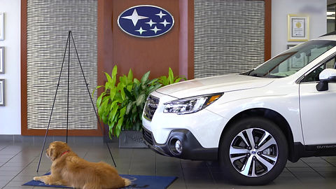 MAWP service dog Lennon was featured in Daytona Subaru's Commerical