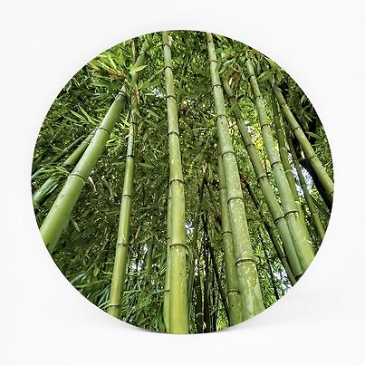 plant fibre.png