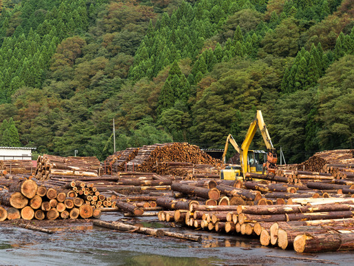 Sustainable Forestry: How we protect our forests