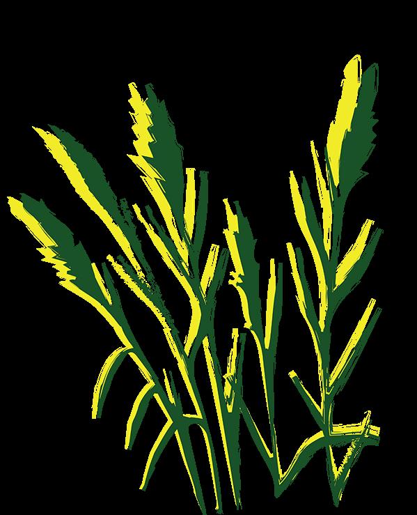 Weidmatt_Logo-04.png