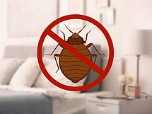 Stop-bug-sign-and-clean-bed-in-228078823
