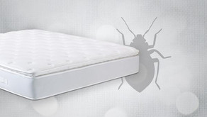 What Are Bed Bugs Attracted to?