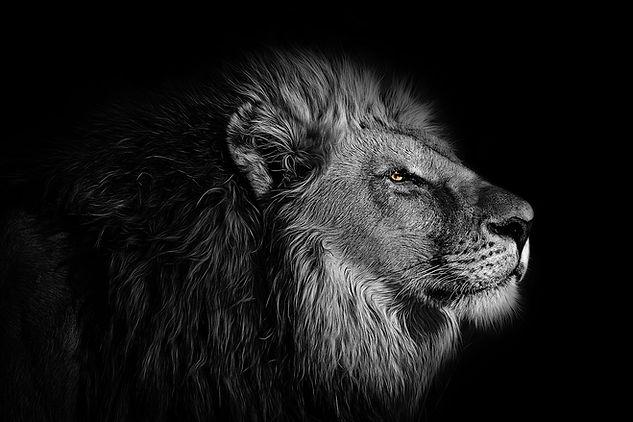 Lion (Small).jpg